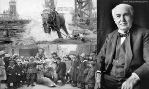 Edisonun İdam Ettiği Fil